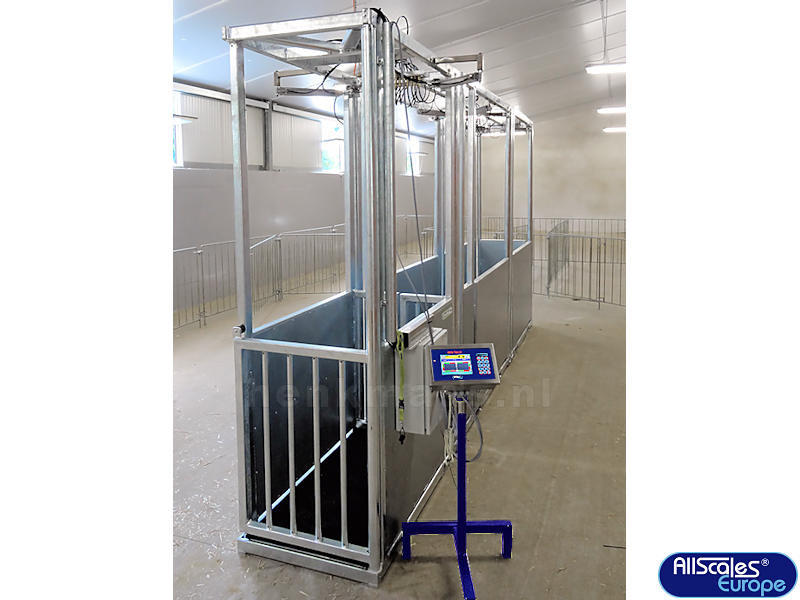 Calf Weighing and Sorting System - Henk Maas