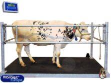 koeienweegschaal-2c